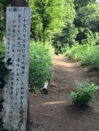 死体の森公園 - 真実はどこにあるの?