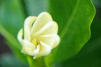 開花中はボケの範囲が多い - Hair Produce TIARE