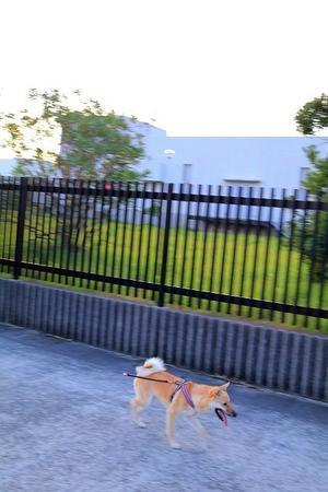 散歩の鬼。 - 結局ただの犬バカです。