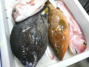 「今日の九州から直送鮮魚!」 -