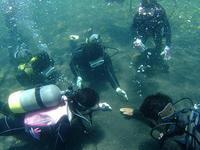 連休初日!天気も海もサイコーです(^O^)/ - 八丈島ダイビングサービス カナロアへようこそ!