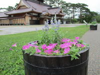 五稜郭公園 コンテナのお花 - 函館市住宅都市施設公社 スタッフブログ