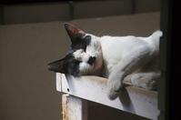 最近の猫事情31 - 鳥会えず猫生活