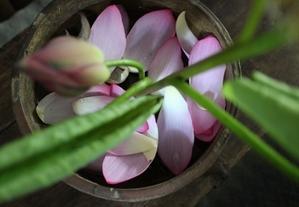 花だより 蓮の花 - 川口美術