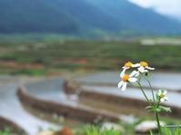 北部ベトナムの巻㉝ ☆花と蝶 - 夢・ファンダンゴ