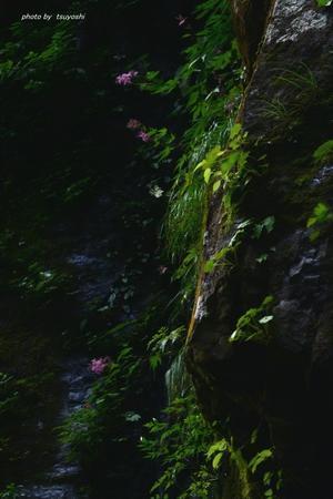 阿弥陀ケ滝Ⅲ - 四季の写ろい
