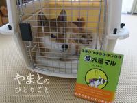 犬の本【番犬屋マル】 - yamatoのひとりごと