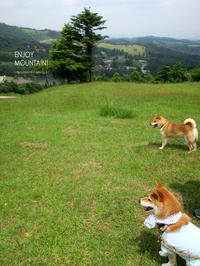 茶臼山に柴犬3兄弟参上!【フォトムービーあり】 - yamatoのひとりごと