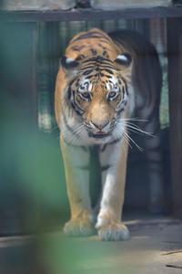 アズサを待ちながら - 動物園へ行こう
