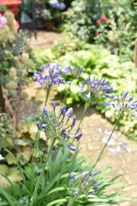 web 植物生活 - 小さな庭 2