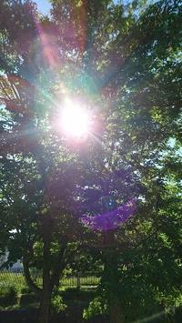 自然と五感 - 札幌市南区石山  東洋コンプリメンタリーメディスンスクール Noya のや