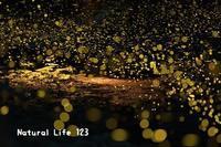 ヒメボタル    (7月19日) - ナチュラルライフ123