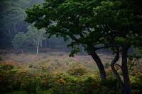 群馬 赤城白樺牧場のレンゲツツジ その1 - 日本あちこち撮り歩記