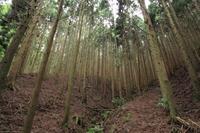 苔の森 - 心 色