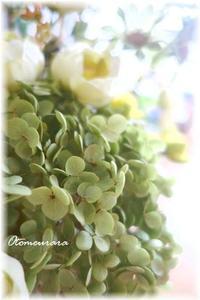 アナベル - 日々楽しく ♪mon bonheur
