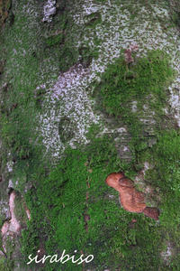 鳥の眼で - 小さな森の写真館 (a small forest story)