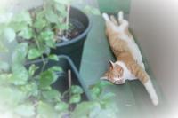 暑くても日向ぼっこ - ぎんネコ☆はうす