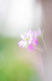 写真展 展示作品 続き - ainosatoブログ02