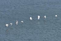 大淀川の鳥たち (*^_^*) - 犬連れへんろ*二人と一匹のはなし*