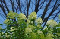 蓮の花咲く沼へ ~ 城沼 - 季節の風を追いかけて
