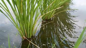 手賀沼の夏風景 -
