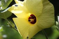 小石川植物園の花と蝶 - 子猫の迷い道Ⅱ