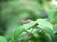 赤塚の蝶 - いや、だから 姉ちゃん じゃなくて ネイチャー・・・