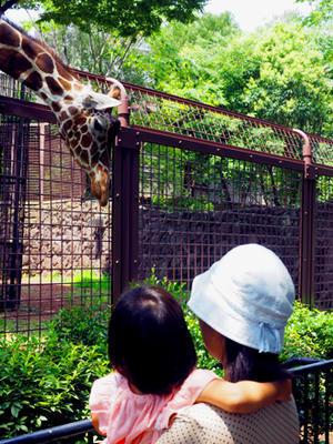 夏の上野動物園キリン(7月20日) -