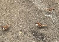 雀とカナヘビ - つれづれ日記