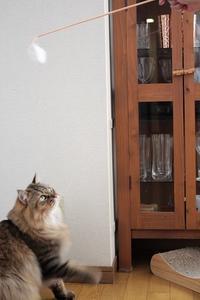 ブロ友さんが猫を飛ばせてくれました - きょうだい猫と仲良し暮らし