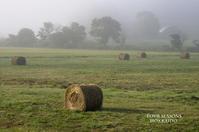 霧朝の牧草ロール - ekkoの --- four seasons --- 北海道