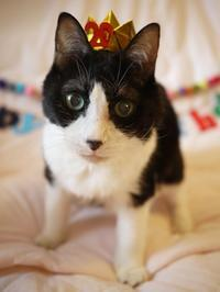 お誕生日猫 空20歳編。 - ゆきねこ猫家族