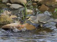 しばらくお休み - 『彩の国ピンボケ野鳥写真館』