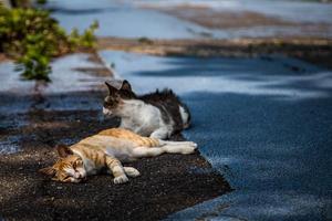 島の猫 - My Palpitation