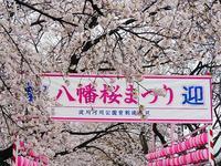 桜回顧(7)背割堤 - 徒然彩時記