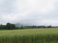 小雨混じる尻別川  羊蹄山、雲中にしてヤマメ一匹 - 気ままにアウトドアー日和