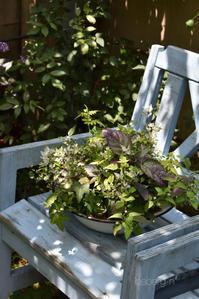 カラーリーフで寄せ植え作りました♪ - 小さな庭 2