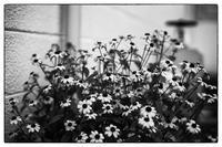 散歩向日町-92 - Hare's Photolog