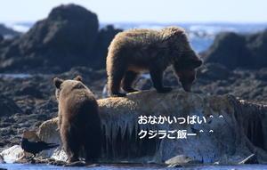 知床のクマ^^帰宅 - シマエナガとユキホオジロ/写団ひぐま・まとも