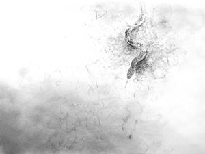 《彼方から聞こえる――フィヨ、フィヨ,フィヨ、フィヨ・・・》 - 『ヤマセミの谿から・・・ある谷の記憶と追想』