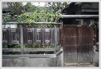 千住散歩 -646 - Camellia-shige Gallery 2
