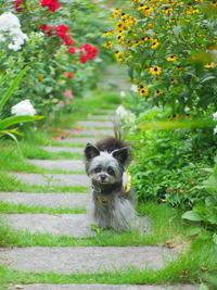ひみつの花園 - ぶらり休暇