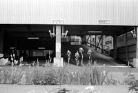アヤメと駐車場出入り口 - 照片画廊