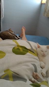 猫まみれの朝 - 雑記帳~信州の東のほうで。
