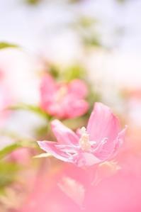 花菜ガーデン♪ 花撮り♪ - 想い出