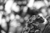 下田の旅☆彡紫陽花咲く下田公園☆彡 - 僕の足跡