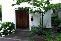 メリちゃんとお散歩/ Walking with my dog. ....and sneak a peek at gardens. - 花と天然石ハンドメイドジュエリー
