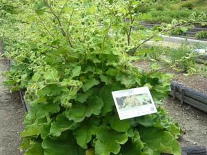 京都の武田製薬薬草園行ってきました。 - 風雅舎ブログ