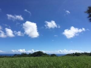 夏~ - 徳之島 MAC ぬっちかくっちかカウンター