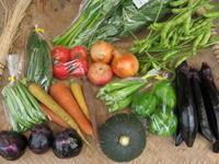 今週の野菜セット7月4週目 - まるみど農園のあれこれ日記